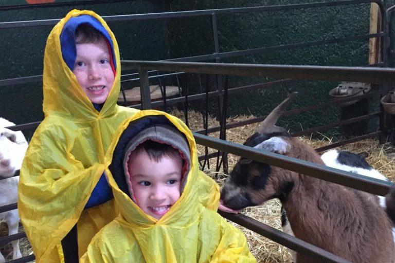 children in animal barn