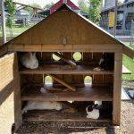 bunny hutch